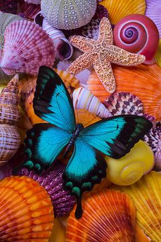 Exotic Photograph - Blue Butterfly Among Sea Shells by Garry Gay