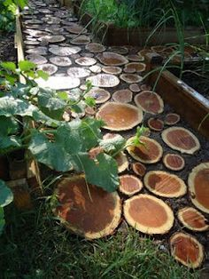cut wood discs for garden path, plant thyme in between to help hold them in place #repurposed #recycled #diy