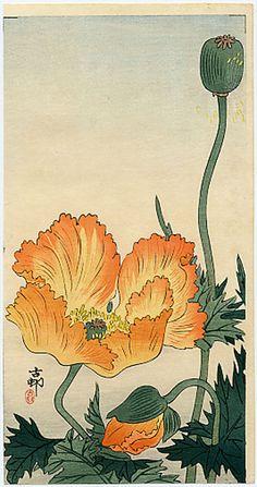 Koson, Orange Poppies