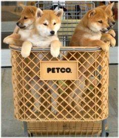 Pet Adoption Events Near You Shiba Inu Shiba Inu Dog I Love Dogs