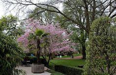 Gemütlich unter Palmen sitzen, ... kann man auch in Merzig. Auch wenn hier im Stadtpark die Sonne grad mal Pause macht. Dafür scheint sie heute und morgen umso stärker. :-)