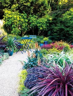 Foliage keeps this border looking good nearly all year. Wine-red Cordyline 'Design-a-Line Burgundy', silvery green Astelia chathamica x nervosa 'Silver Shadow', plum- hued Loropetalum chinense 'Purple Pixie', and yellow-green Carex 'Everillo' cluster in the foreground; reddish nandinas brighten the back. The apricot- flowered Digiplexis 'Illumination Flame' is a dramatic accent. DESIGN Johanna Silver, Lauren Dunec Hoang