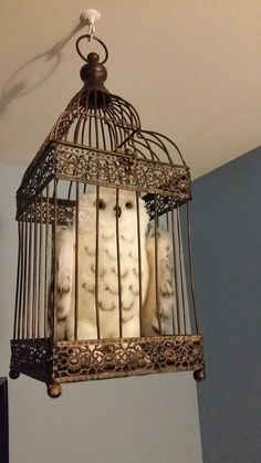 Hedwig in owl cage for Harry Potter nursery.