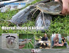 Afrikaanse Meerval vissen op visvijvers in Nederland is kicken!