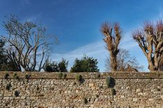 This is the actual wall Humpty Dumpty sat on. True story. #walls #winchelsea #kent #countrylife