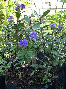 C mo cuidar hortensias helechos y rboles frutales youtube dise o exterior y jardiner a - Cuidar hortensias exterior ...