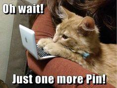 Kitty pinterest queen... Cat memes - kitty cat humor funny joke gato chat captions feline laugh photo