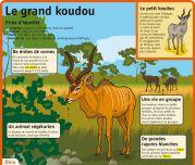 Le grand koudou -  Le Petit Quotidien, le seul site d'information quotidienne pour les 6 - 10 ans ! French Resources, Thing 1, French Language, History, Movie Posters, Drawing Techniques, Drawings, Animals Beautiful, Languages