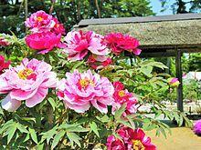 須賀川牡丹園有料開園時