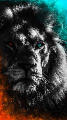 Lion Heterochromia IPhone Wallpaper - IPhone Wallpapers
