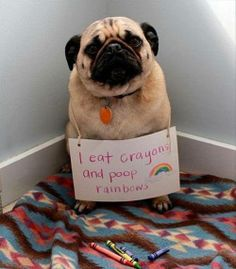 Adorable!  Dog of shame and so cute.