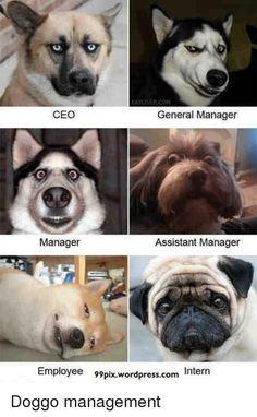 Master Thesis Advisor Supervisor Meme Dog Funny Videos - Vision specialist