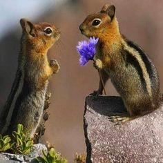 Squirrel cousins...