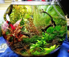 Planted Tank: Rondure by Cory Hopkins