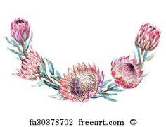 Buy Watercolor Tropical Protea Wreath by Zenina on GraphicRiver. Beautiful vector image with nice watercolor tropical protea wreath Protea Art, Flor Protea, Protea Flower, Watercolor Feather, Wreath Watercolor, Watercolor Flowers, Watercolor Art, Botanical Drawings, Botanical Illustration
