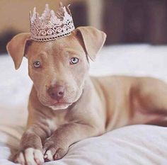 Princess Pittie