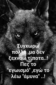 Wolf Quotes, Me Quotes, Motivational Quotes, My Philosophy, Greek Quotes, Picture Quotes, Dog Argentino, Clever, Feelings