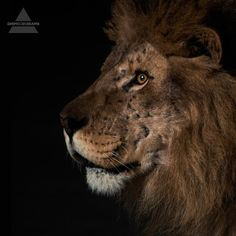 Lion - Mars is Coming  30 Seconds to Mars