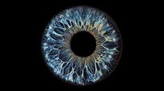 Image result for macro shot of iris