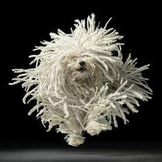 "Komondor a. ""Mop"" Dog by Tim Flach Vida Animal, Mundo Animal, Mop Dog, Dog Cat, Pet Pet, Chien Komondor, I Love Dogs, Cute Dogs, Hungarian Puli"