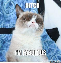 Fabulous grumpy cat