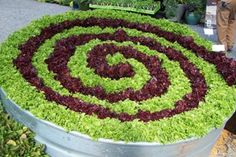 Spiral lettuce in container could mix in other greens etc like Chard in reds and greens