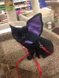 Cute kitten bat costume. You could make  these bat wings for all animals. Dollar Store I'd get glow sticks add them so nobody step on them!