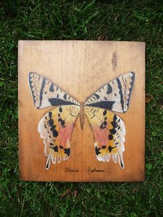 Urania Riphaeus Butterfly Painting by KRaeArt on Etsy, $50.00
