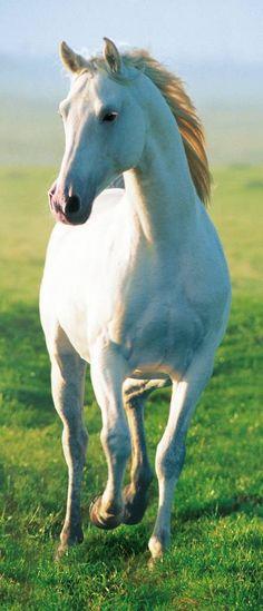 Deurposter White Horse