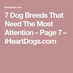 7 Dog Breeds That Need The Most Attention – Page 7 – iHeartDogs.com