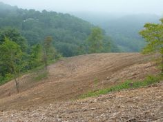 Field and Pasture Reclamation