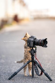 Best Camera For Photography, Photography Timeline, Photography Basics, Couple Photography Poses, Taking Pictures, Funny Pictures, Cute Cats, Funny Cats, Cat Camera