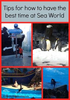 How to have the best trip to SeaWorld, Orlando Florida