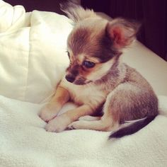baby dog #Funny#Cute#Dogs#Animals#Adorable#Baby