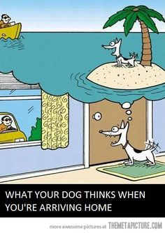 What your dog thinks