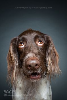 Dexter rolling his eyes by Wieselblitz #animals #pets #fadighanemmd