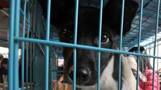 Welcome to Emmanuel Donkor's Blog    www.DonkorsBlog.Com                                        : Taiwan bans slaughter of cats and dogs for human c...