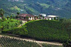 """Eje cafetero- Zona Cafetera (the Coffee Triangle) is Colombia's main coffee-growing region. """"Una experiencia maravillosa conocer el proceso del cafè."""" (""""A marvelous experience to know the coffee process."""")"""