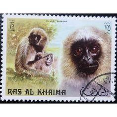 Ras al-Khaimah, Wild Life, Primates, Sivery Gibbons, 75 Dirhams, 1973