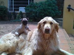"""This reminds me of the book """"The Complete Adventures of Big Dog and Little Dog!"""""""