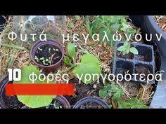 ❌ τα φυτά μεγαλώνουν 10 φορές πιο γρήγορα | #ταμυστικατησγης - YouTube Garden Works, Country Life, Nature, Flowers, Plants, Gardens, Youtube, Paintings, Ideas