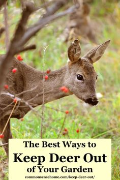 How to protect your vegetable garden, flowers, trees and shrubs from deer with fences, scare tactics, sprays and more. Homemade Deer Repellant, Deer Food, Deer Resistant Garden, Deer Fence, Gardening Tips, Vegetable Gardening, Animal Control, Garden Pests, Small Trees