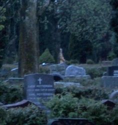 This photo was taken at night in an empty cemetary to practice night shots yet someone showed up behind the tree.