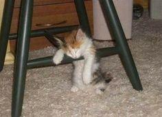 Tired kitten.  ホントに疲れた…