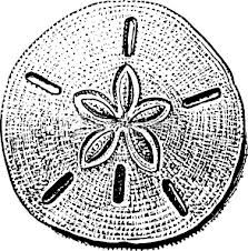 sand dollar tattoo ; I want one on my foot