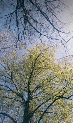 My Photo Spring 💞