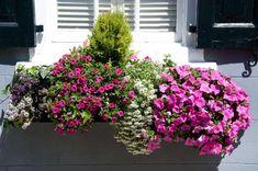 Piante con fiori ricadenti per creare macchie di verde e colore ...