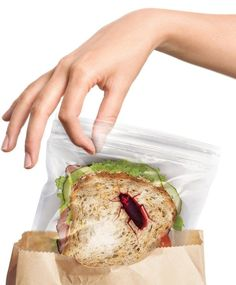 These cockroach printed sandwich bags to keep people from eating your stuff and probably talking to you for the rest of the day. | 27 Weird AF Kitchen Products You Didn't Know Existed