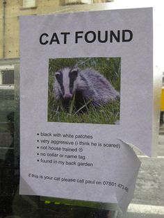Cat found ???