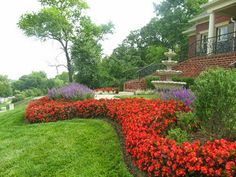 Begonias and Victoria Blue Salvia by Color Burst Landscapes